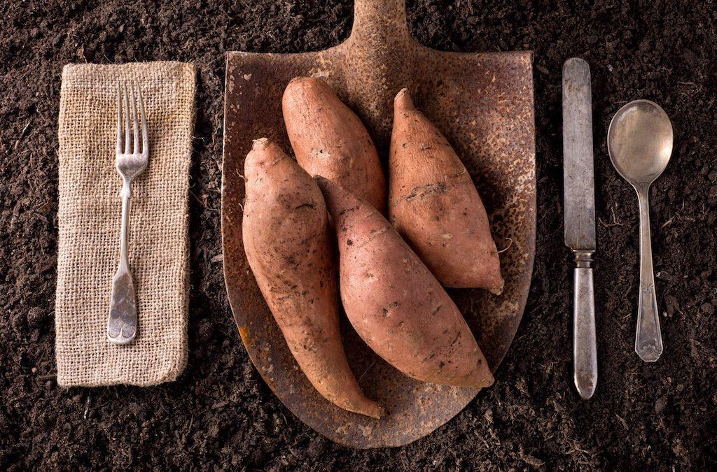 Batata o Patata Dolce